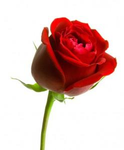 fleur cercueil